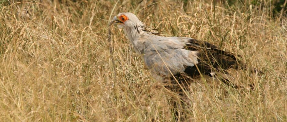 Practical research will aid wild populations