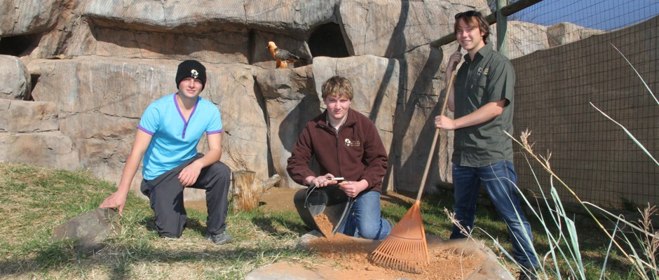 Volunteers Work in Lesedi's Enclosure
