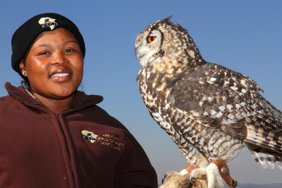 Belinda introduces Nando the Cape Eagle Owl